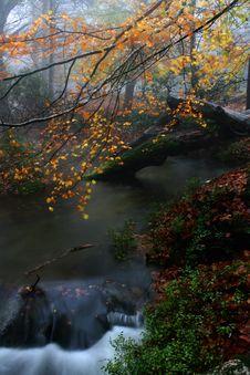 Free Autumn Royalty Free Stock Photo - 18244555