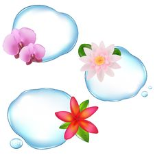 Free Flowers In Water Stock Image - 18244811