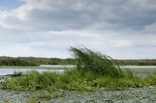 Danube Delta Landscape Royalty Free Stock Photography