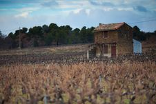 French House In Vineyard, In Provence South France Stock Images