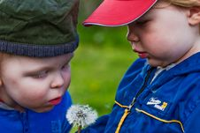 Free Two Boys And A Dandelion Stock Images - 18247694