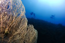 Free Gorgonian Sea Fan And Sillhouetted Divers Stock Image - 18248011