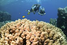 Free Scuba Divers On Coral Reef Royalty Free Stock Photography - 18248027