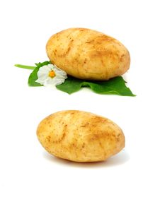 Free New Potatoes Royalty Free Stock Photos - 18248868