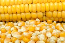 Free Corn And Corncob Royalty Free Stock Photo - 18248885