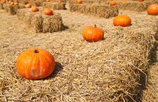 Row Of  Pumpkins On The Straw Royalty Free Stock Photos