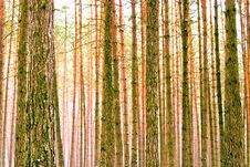 Free Trees Stock Photo - 18249740