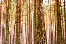 Free Trees Stock Photography - 18249752