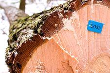 Free Wood Royalty Free Stock Image - 18249806