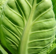 Free Cabbage Leaf Stock Photo - 18250230