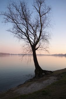 Free Tree By The Lake At Sunset Stock Image - 18251241