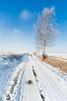 Free Winter Road And Frozen Tree Landscape Royalty Free Stock Photography - 18252297