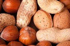 Free Macro Picture Of Nuts Stock Images - 18255614