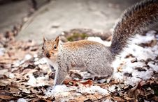 Free Squirell Looking In The Camera Stock Photography - 18257402