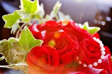 Free Sun Rays Shining On Beautiful Blood Red Roses Royalty Free Stock Image - 18257766