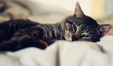 Free Relaxin  Kitty Royalty Free Stock Photography - 18258187