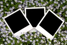 Photo On Floral Background Royalty Free Stock Image