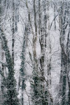 Free Park In Snow Royalty Free Stock Images - 18259329
