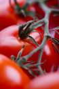 Free Closeup Of Red Tomatoes Royalty Free Stock Photo - 18261705