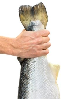 Lucky Fisherman Caught The Fish By The Tail Stock Photos
