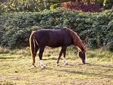Free Horse On The Meadow Stock Images - 18261984