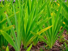 Free Green Grass Royalty Free Stock Photo - 18264455