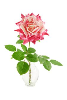 Free Pink Rose In Vase Royalty Free Stock Images - 18264569