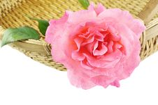 Free Rose In A Basket Stock Images - 18264574