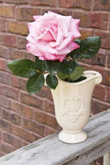 Pink Rose In Vase Royalty Free Stock Image