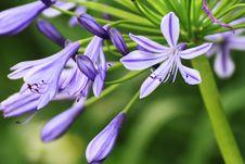Free Purple Flower Stock Image - 18265581