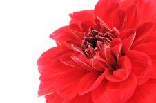 Free Red Dahlia Close-up Stock Photos - 18266023