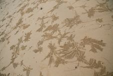 Free Background  Sand Crabs Royalty Free Stock Photos - 18266338