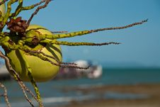 Free Coconut In Front Of Pier Stock Photography - 18267112