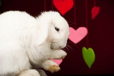 Free White Cute Bunny Washing Paws Stock Photography - 18268662