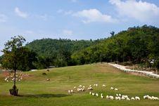 Free Many Sheep On A Hill Stock Photo - 18271900