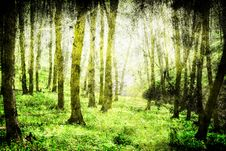 Free Forest Stock Photos - 18273813