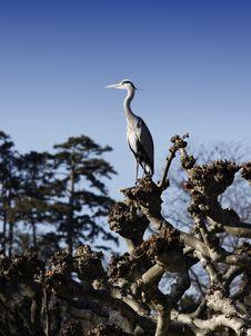 Free Heron Stock Photography - 18276762