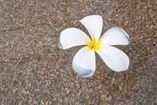 Free Frangipani In The Water Stock Photos - 18278143