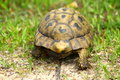 Free Tortoise Stock Photography - 18286172