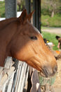 Free Horse Stock Photos - 18287223