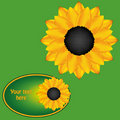 Free Sunflower Card Royalty Free Stock Photography - 18289657