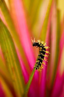 Free Caterpillar Stock Photos - 18280893