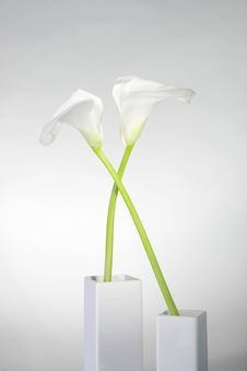 Beautiful Calla In Vase Royalty Free Stock Photos