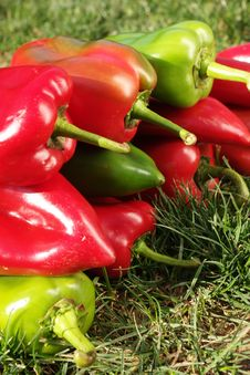 Free Colorful Red And Green Pepper Stock Photos - 18284743