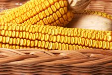 Free Corn In The Basket Royalty Free Stock Photography - 18284757