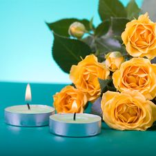 Beautiful Yellow Roses Royalty Free Stock Photo