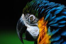 Free Macaw S Eyelids Royalty Free Stock Photography - 18285597