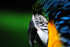 Free Macaw S Beak Royalty Free Stock Photo - 18285635