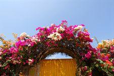 Free Flowers Stock Image - 18286271
