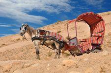 Free Jordonhorse Stock Photos - 18287863